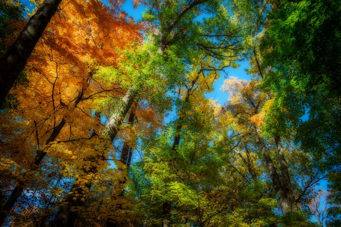 Фото бесплатно верхушки, деревьев, кроны - на рабочий стол