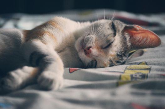 Сладко спящий кот