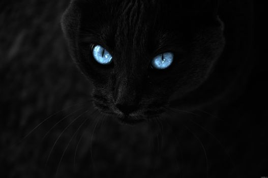 Photo free black background, black, cat