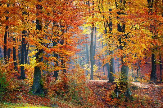 Фото бесплатно Park, осенние цвета, краски осени