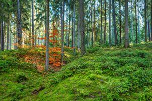 Позднее лето в лесу