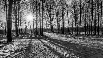 Фото бесплатно crossroads, trees, wood