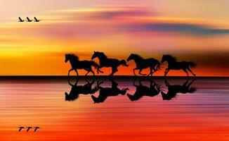 Фото бесплатно лошади, птицы, утки
