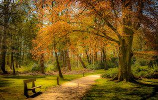 Фото бесплатно скамья, осенние цвета, осенние листья