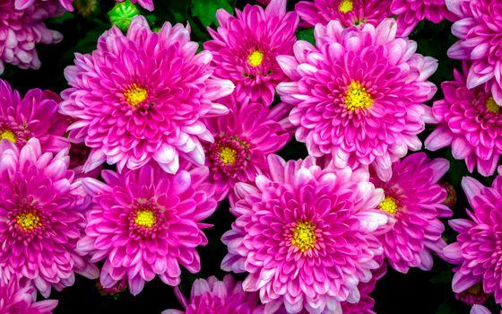 Фон из цветов георгин · бесплатное фото
