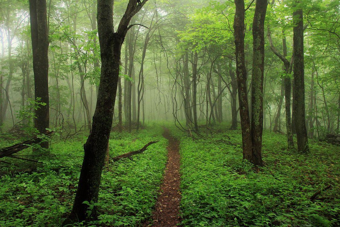 Лесная тропинка · бесплатное фото