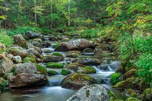 Заставки лес,речка,ручей,камни,деревья,природа,пейзаж