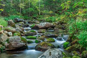 Photo free forest, river, Creek