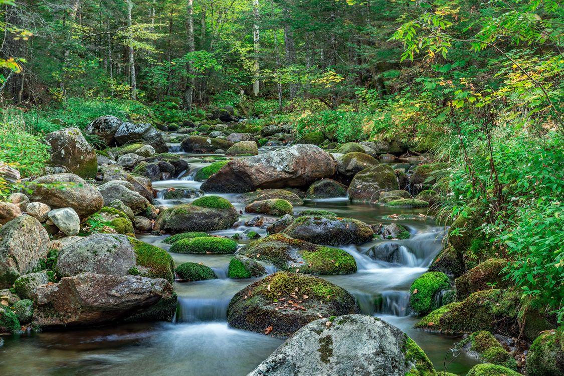Обои лес, речка, ручей, камни, деревья, природа, пейзаж картинки на телефон