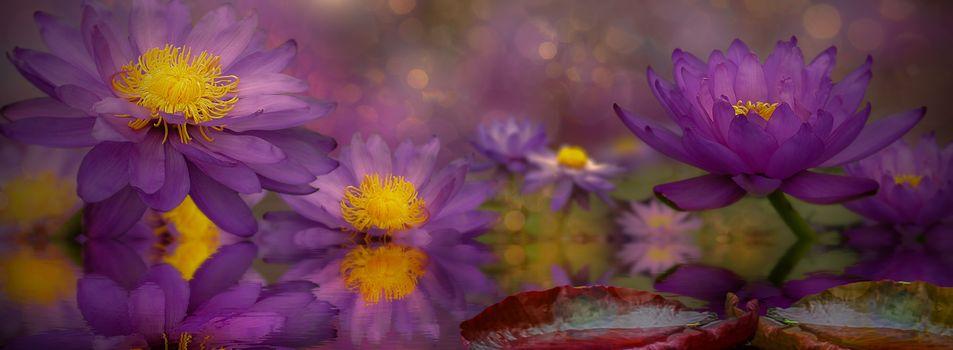 Фото бесплатно макро, лотос, флора