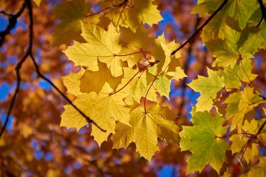 Photo free fall colors, autumn leaves, trees
