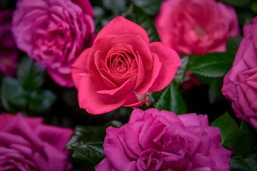 Страница цветов