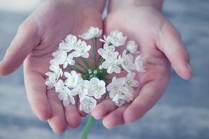 Заставки рука, цвести, растение