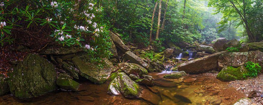 Фото бесплатно Boone Fork Creek Panorama, North Carolina, лес, деревья, речка, ручей, водопад, камни, пейзаж