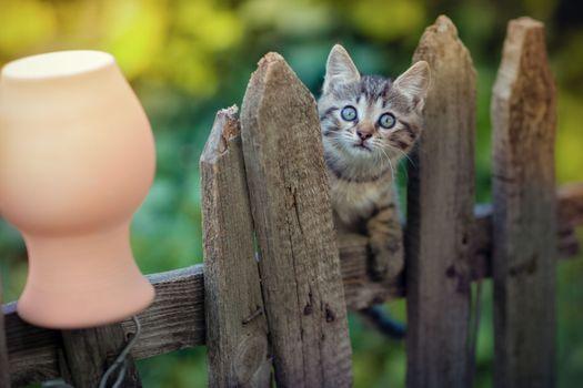 Фото бесплатно котенок, уши, животные