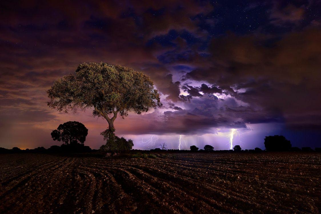 Фото бесплатно поле, молния, ночь, дерево, пашня, иллюминация, вспышка, гроза, облака, небо, природа, пейзаж, пейзажи