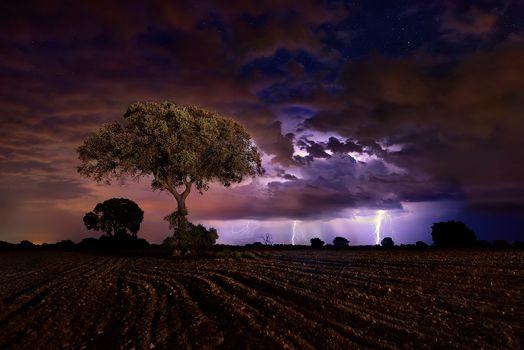Photo free field, lightning, night