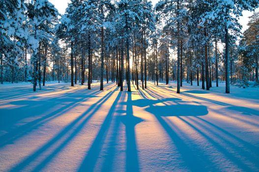 Зимний восход в лесу