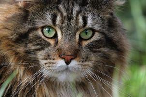 Заставки домашнее животное, кошка, усы