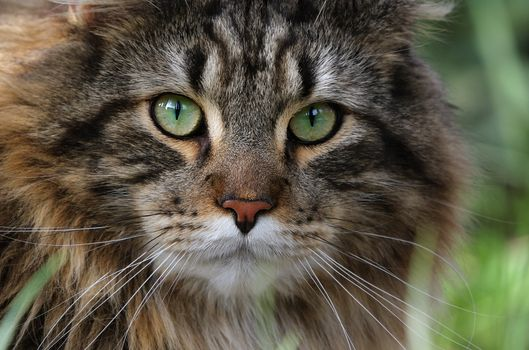 Photo free pet, cat, mustache