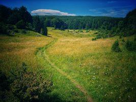 Заставки поле, тропинка, лес
