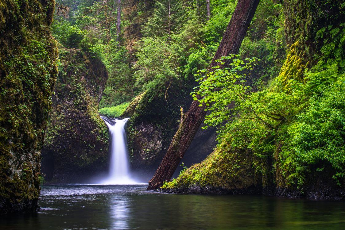 Водопад в старом дремучем лесу · бесплатное фото