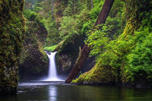 Водопад в старом дремучем лесу
