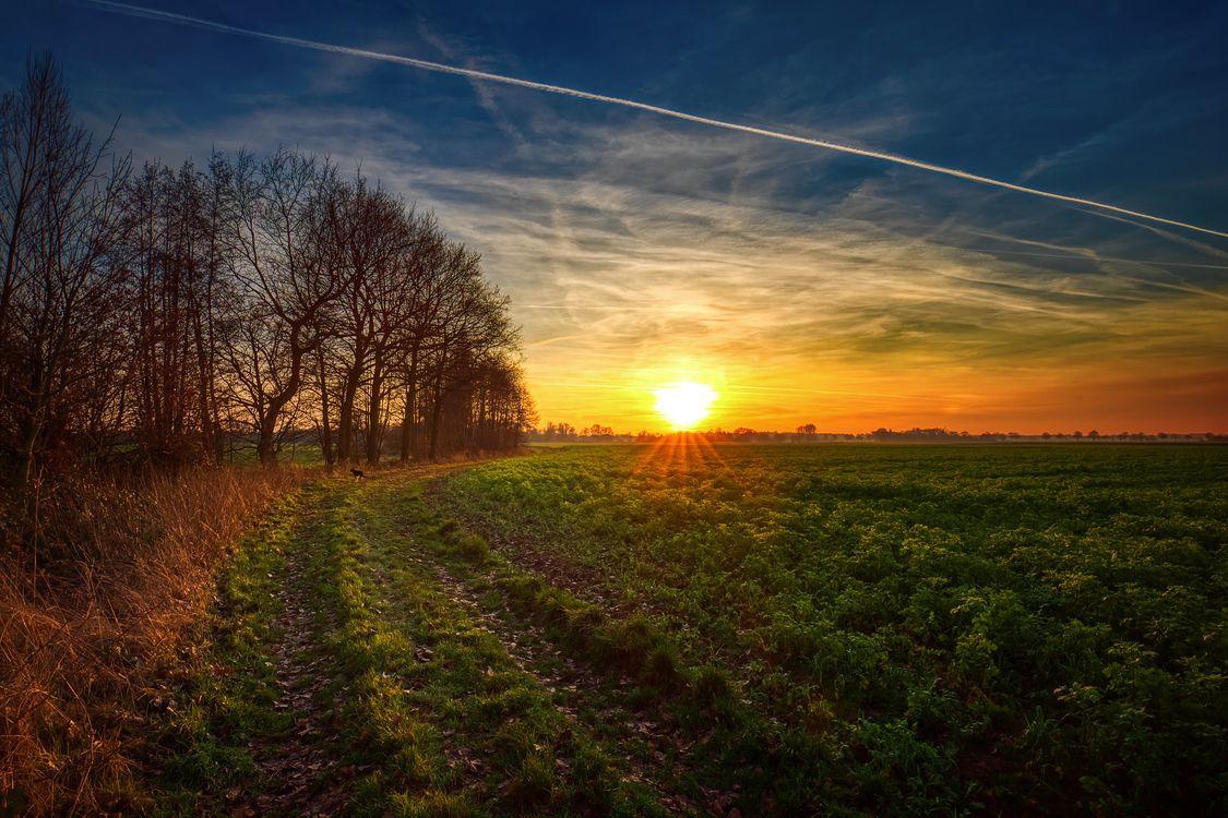 Фото бесплатно закат, поле, деревья, дорога, небо, природа, пейзаж, пейзажи