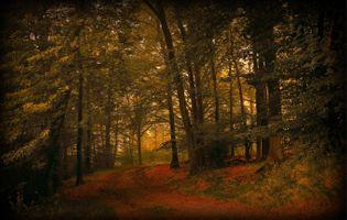 Фото бесплатно осень, лес, пейзажи, природа, времена года, деревья, лесная тропа, тропинка