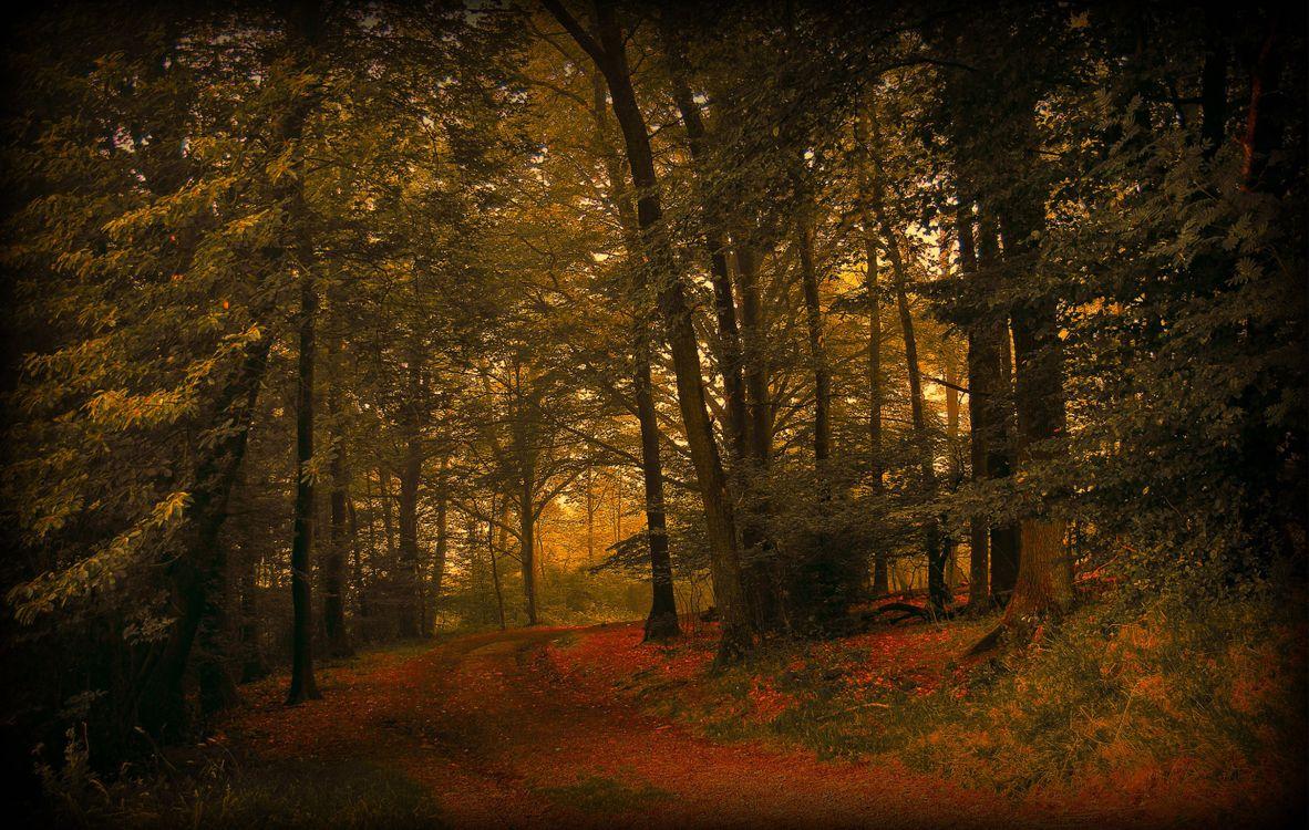 Фото бесплатно сезоны, тропинка, осень - на рабочий стол