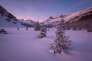 Бесплатные фото Bow Lake,елки в снегу,в сугробах,Alberta,Canada,зима,закат