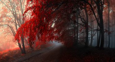 Заставки осенние краски, пейзаж, цвета осени