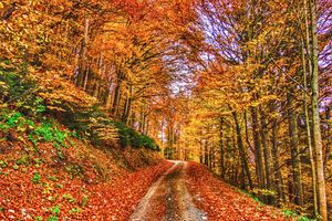 Фото бесплатно природа, цвета осени, дорога