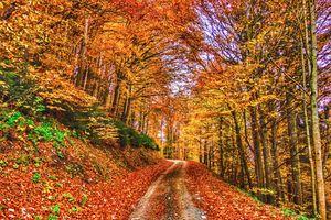 Заставки природа, цвета осени, дорога