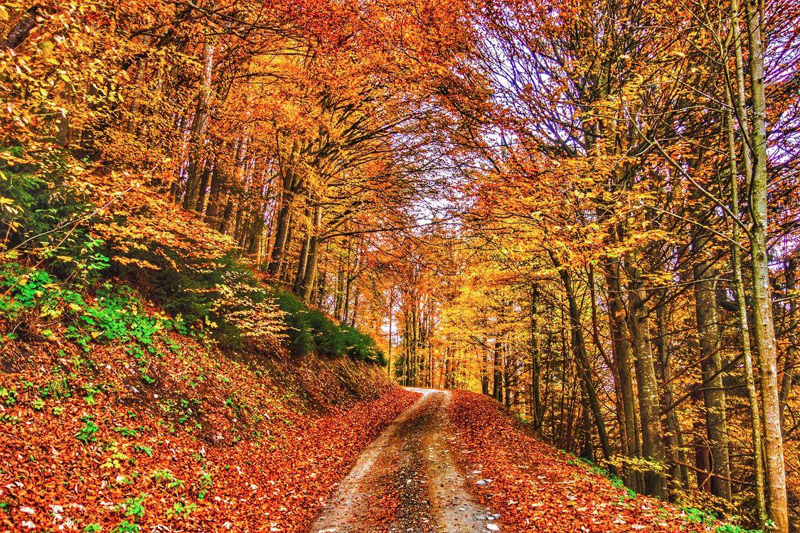 Фото бесплатно природа, цвета осени, дорога - на рабочий стол