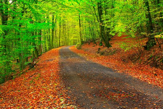 Photo free park, autumn forest, road