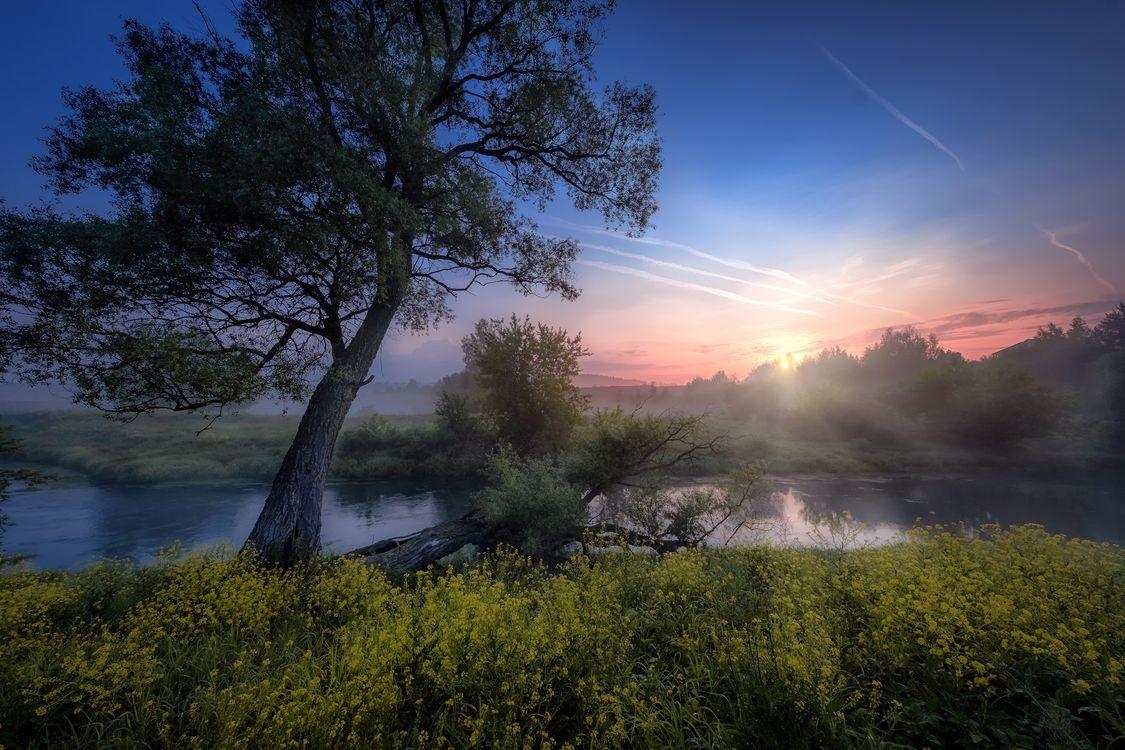 Фото бесплатно река, россия, деревья - на рабочий стол