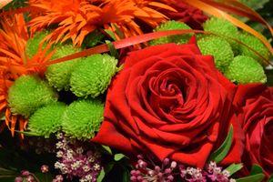 Фото бесплатно розы, букет, флора