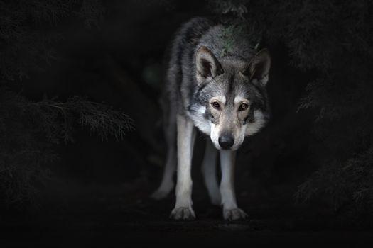 Volkosob in twilight · free photo
