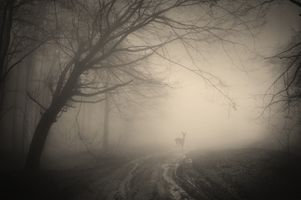 Photo free creepy, deer, forest