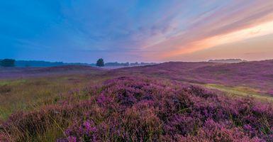 Бесплатные фото лавандовое поле,закат солнца,красивое небо,поле,лаванда,цветы,природа