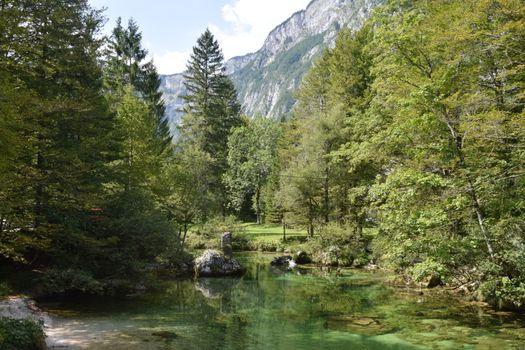 Фото бесплатно Словения, Бохини, природа