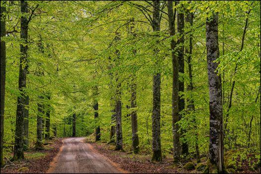 Заставки лес,вдоль лесных дорог,деревья,дорога,природа,пейзаж
