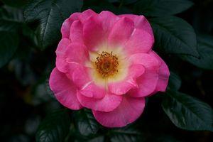 Заставки цветок, цветочная композиция, цветение