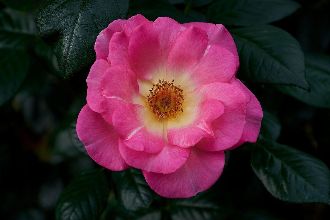 Обои цветок, цветочная композиция, цветение картинки на телефон