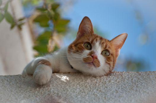 Фото бесплатно кот, смешно, блики