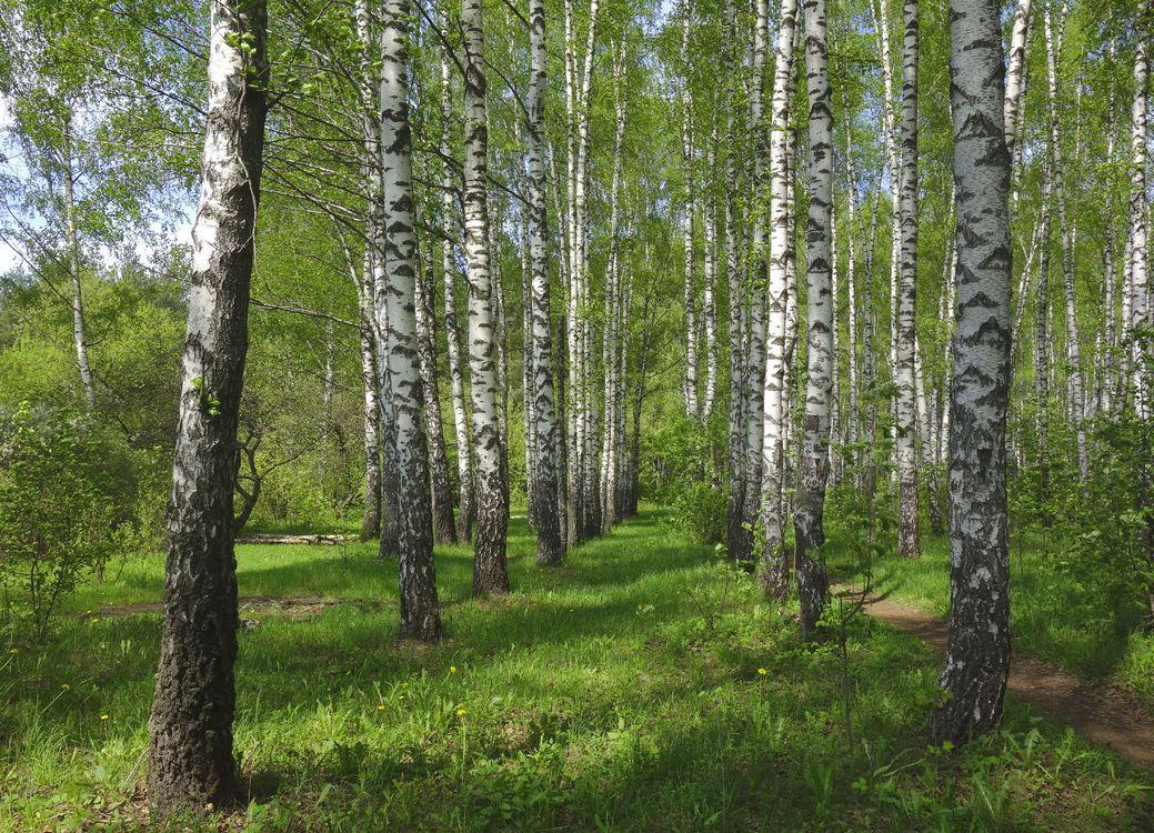 Обои лето, пейзаж, лес картинки на телефон