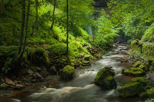 Бесплатные фото лес,река,деревья,тропинка,камни,мох,Йоркшир
