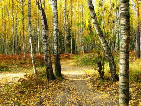 Photo free autumn, the fork in the forest, birch trees