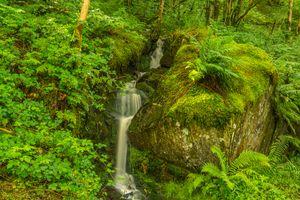 Бесплатные фото водопад,растительность,лес,деревья,мох,скалы,природа